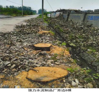 举报石家庄鹿泉区南故城村村主任安顺江隐瞒砍伐树木的真相